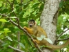 reserve-zoologique-de-calviac11