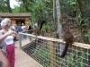reserve-zoologique-de-calviac12