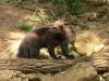 reserve-zoologique-de-calviac16