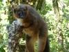 reserve-zoologique-de-calviac4