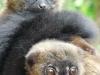 reserve-zoologique-de-calviac5