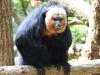 reserve-zoologique-de-calviac8